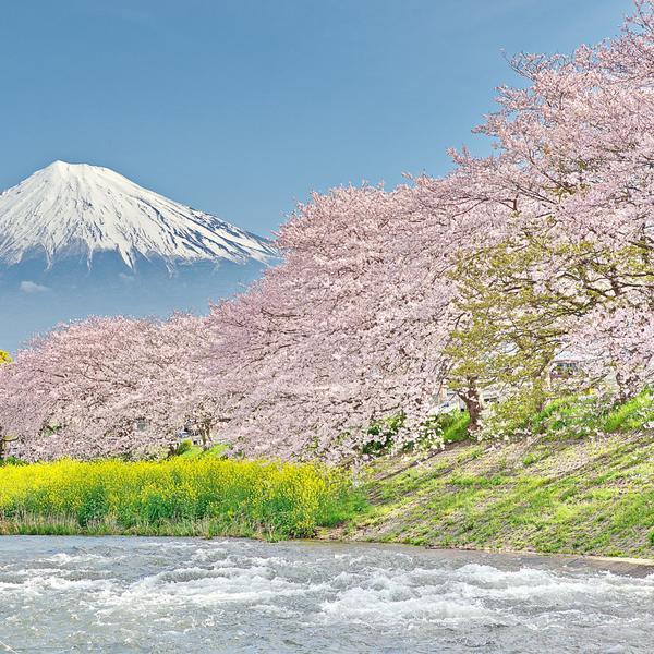 Mount Fuji at the Uruigawa River in Japan