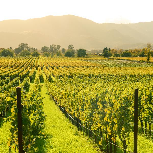 Napa Valley in California, USA