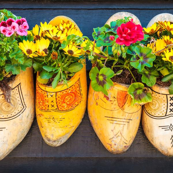 flowers in clogs, Amsterdam
