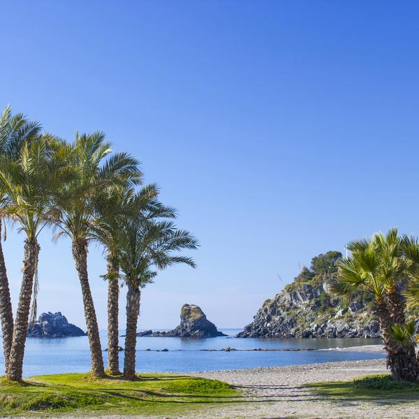 Palm trees in Andalucia Drozdowski