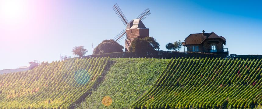 Vineyards in champagne and windmill on hill