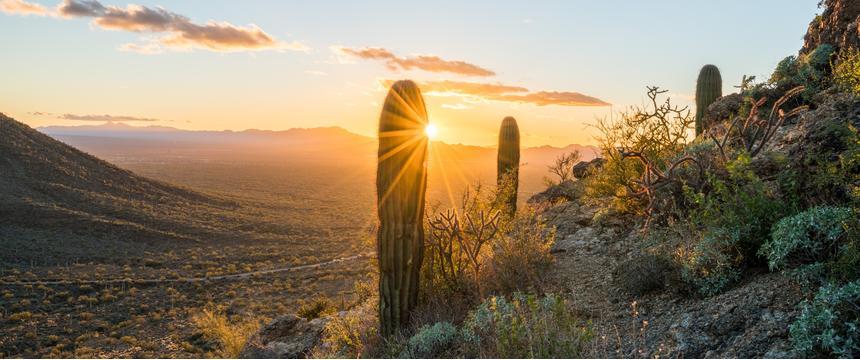 The Sonoran Desert, USA
